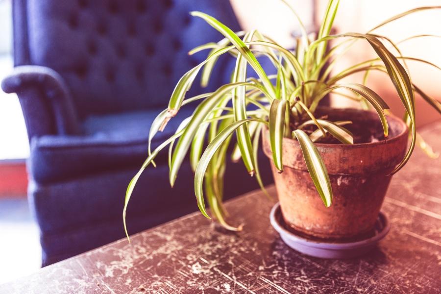 plant sofa